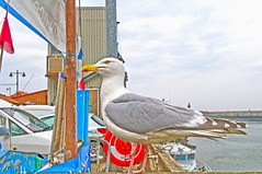 Seagull (teelawn) Tags: whitby northyorkshire yorkshire seagull gull sky boat mast sail cars sea harbour coast lamps