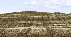 Earth Folds (Don Arsenault) Tags: hills field landscape scenery sigmadg150500f5663apohsm canoneos7d canada camrose alberta donarsenault clouds