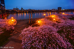 Spring in Portland (Tri Minh) Tags: portland portlandor oregon northwest nw pnw cherry cherryblossoms