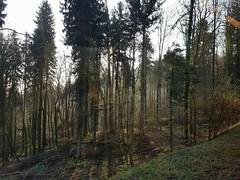 San Galo (Suiza) (avasic) Tags: bosque árboles vegetación geografíafísica forest trees physicalgeography