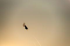 Creepy tiny spider (kondex vs mechagodzilla) Tags: spider creepy dark danger dangerous pond fishpond lake sunset bokeh predator spiderweb web net dof depth field bokehlicious smooth handheld sigma sonyflickraward macro macrodreams makro closeup