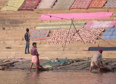 The Washermen (peterkelly) Tags: digital canon 6d asia india gadventures essentialindia varanasi gangesriver uttarpradesh ghat steps stairs laundry river water washing men sheets fabric textiles