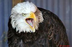 (67) Liberty's Owl Raptor & Reptile Centre