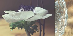 69/365 green & 1960's (SarahLaBu) Tags: blume flower glass glas bowl schale weeklytheme 365the2017edition 3652017 day69365 10mar17 iphone6s samsungnx300 week102017 52weeksthe2017edition weekstartingsundaymarch52017 diptych diptychon