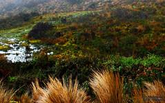 High Andes Vegetation (Mahmoud R Maheri) Tags: mountain andes vegetation plants wildflowers wildbush ecuador pool water highmountain