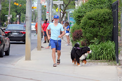 Faces of Toronto: young man and Swiss Mountain dog (Canadian Pacific) Tags: toronto ontario canada canadian city urban man young guy dog walker walking queenstreet e east blue jays greater swiss mountain