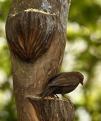 On a ledge. (Barry Miller _ Bazz) Tags: bird blackbird canon5dmark3 70200mmf28iil canonlens victoriapark widnes england wildlife feeding seed perch