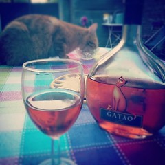 C'est un peu l'été (Corinne Lejeune Girot) Tags: instagramapp square squareformat iphoneography uploaded:by=instagram nashville spring wine cat happiness summer