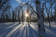(ulillehauglorentsen) Tags: tree trees snow winterlandscape landscape nature winter cold frost ice shadows sky bluesky northnorway nordnorge norway norge norwegen sun sunny sunrays norwegianwinterlandscape troms wintertime