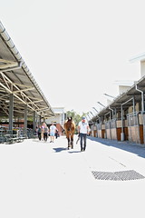 63+472: 2017 Sydney Royal Easter Show  (29/42) (geemuses) Tags: 2017sydneyroyaleastershow horse horses animals pets nature agriculturalshow riders riding stalls horsestalls sheds carthorse