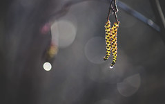 9095 (taralees) Tags: april spring mainewoods springonrabbitridge floraandfauna