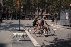 Across the line (alllex777) Tags: across line dog people barcelona street streetphoto streetphotography canon sigma 35mm art bicycle