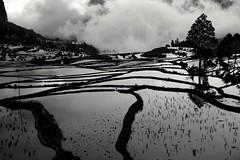 Le noir et blanc vous vont si bien. Dans le sud Yunnan. CoF009 Nature. (nickylechatreux) Tags: nature riziéres yunnan eau nuages arbre ciel paysage challenge009 cof009mark cof009step cof009dmnq cof009pasc