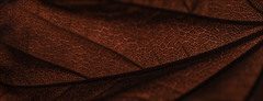 Red Maple Leaf Texture (armandocapochiani) Tags: nature nikon naturalistica flower tree maple acero red texture italy italia impollinazione macro closeup