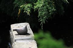 Yaşamak - Living (halukderinöz) Tags: yaşamak living modern art sanat ördek duck bahçe süsüs garden ornament serbia sırbistan novisad canoneos40d eos40d hd