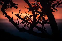 #15/52 Soleil (a n n e s o D) Tags: projet52 soleil 52project coucher lh sunset lehavre octrville