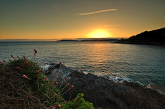 Bovisand Cliffs (Frosty__Seafire) Tags: bovisand evening flowers cliffs plymouth sound sunset d7000 sigma 1020