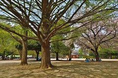 April afternoon (namhdyk) Tags: april afternoon tree tokyo itabashi canon canonpowershot canonpowershotg7x