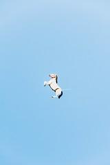 Flying horses (lorenzoviolone) Tags: d5200 dslr nikon nikond5200 portra800 reflex air balloon clearsky event2017saintanthony filmborn floating flying helium inflatableballoons inflatables mastinlabs sky streetphoto streetphotocolor streetphotography walk:trevignano=jan2017 trevignanoromano lazio italy