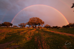 The Oak and the 2 rainbows (LuísSalvador) Tags: herdadedosgrous albernoa beja alentejo portugal nature naturephotography natureza naturewatching natur wildlife sunset sun sol pôrdosol rain rainbow arcoiris green pink brown orange landscape landscapephotography landscapeofportugal paisagemdeportugal paisagem fotografiadepaisagem sky skywatching clouds nuvens canon canon6d tokinasd1628f28 tree inverno winter luíssalvador luíssalvadorphotography