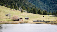 Ranch lands (Jessie T*) Tags: paullakeroad kamloopsbc canada ranch logcabin oldbuildings cattle horses corral cans2s