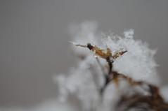 {EXPLORE} ice crystals (Frau Koriander) Tags: nature darmstadt ice crystals icecrystals eiskristalle eis schnee snow nikond300s 60mm nikkoraf60mmƒ28 kristalle structure details detail dof bokeh winter macro makro makroaufnahme
