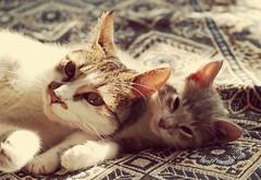 With mom (mcg0011) Tags: gatos gatito cute kitty mascota pet manuelcarrasco