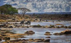 Low Water At The Mara (AnyMotion) Tags: marariver river fluss valley tal landscape landschaft flusslandschaft clouds wolken 2015 anymotion northernserengetinationalpark tanzania tansania africa afrika travel reisen nature natur 6d canoneos6d landschaftsaufnahmen ngc npc