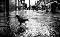 (Mister G.C.) Tags: street urban photography blackandwhite bw scotland