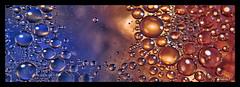 2017-04 - huile et eau 4 (g_dubois_fr) Tags: macro macrophtographie huile eau macrophotography oil water bulles gouttes drop bubbles couleurs colors