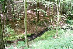 DSC_2614 (oria77) Tags: dolina bolechowicka krakow valley woodland poland