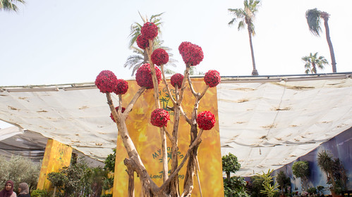 Trees and roses at Egypt's Spring Flowers show