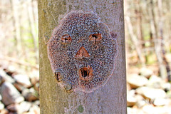 He's lichen the day (cheryl.rose83) Tags: tree lichen face