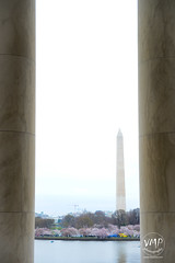 600_5498 (VMP photography) Tags: sakura washington cherryblossom tree travel capitol usa united unitedstates landmarks monuments jefferson lincoln