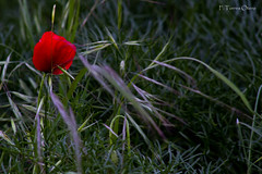 Brisa primaveral. (Ferruxe65) Tags: ourense serradaenciadalastra vilardesilva