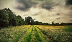 Pastoral (aistora) Tags: auto park uk trees england sky panorama green field grass weather yellow mobile skyline clouds snowflakes reading bush weeds day phone buttercup cloudy britain path walk twyford sony horizon meadow meadows explore filter pasture gloom process a4 drama berkshire effect footpath postprocess sweep