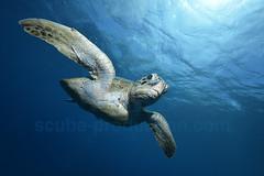 2012 12 METTRA OCEAN INDIEN 5464