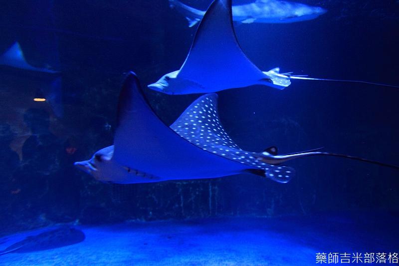 Otaru_Aquarium_278