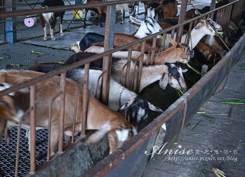 宜農牧場_044.jpg