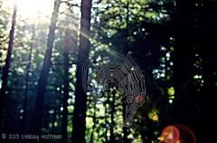 Sunbeams through the spiderweb (lindsayh710) Tags: old light sun tree nature spider leaf spiderweb hills beam mans cave sunbeam hocking conkleshollow