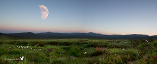 Moon & Bog Cotton