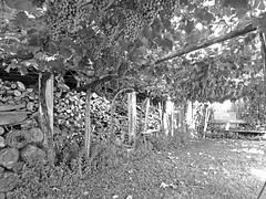 nd-201308-SouthTyrol-110 (Novemberdelta) Tags: tirol tyrol merano anatol ramez meran forst novemberdelta noetzold