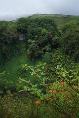 . (kasper.jeppesen) Tags: hawaii rainforest maui