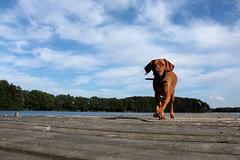 Layla auf dem Steg (gutlaunefotos ☮) Tags: see layla bootssteg