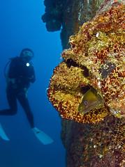 gmwdvr3475 (gerb) Tags: topv111 coral 1025fav 510fav mexico nice topv555 topv333 underwater topv1111 topv999 scuba topv777 diver eel wreck cortez moray tvp aquatica greenmoray d7000 sigma1017fe