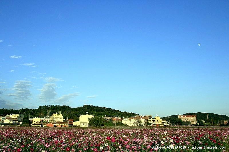 桃園蘆竹.幸福花海季