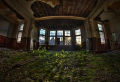 Natures underlay. (Kriegaffe 9) Tags: windows abandoned decay fisheye asylum apricots weds dereleict