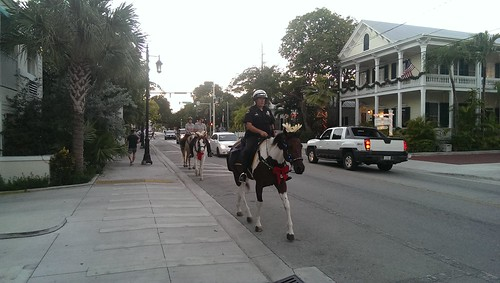 Police horse!