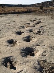 Remember when there was only one set of footprints? (zx147) Tags: colorado dinosaur footprint brontosaurus sauropod brontosaur purgatorieriver commanchenationalgrasslands picketwirecanyon 12282013