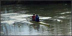CANOTTIERI CONTROLUCE sul SILE (aldofurlanetto) Tags: controluce sile canottieri